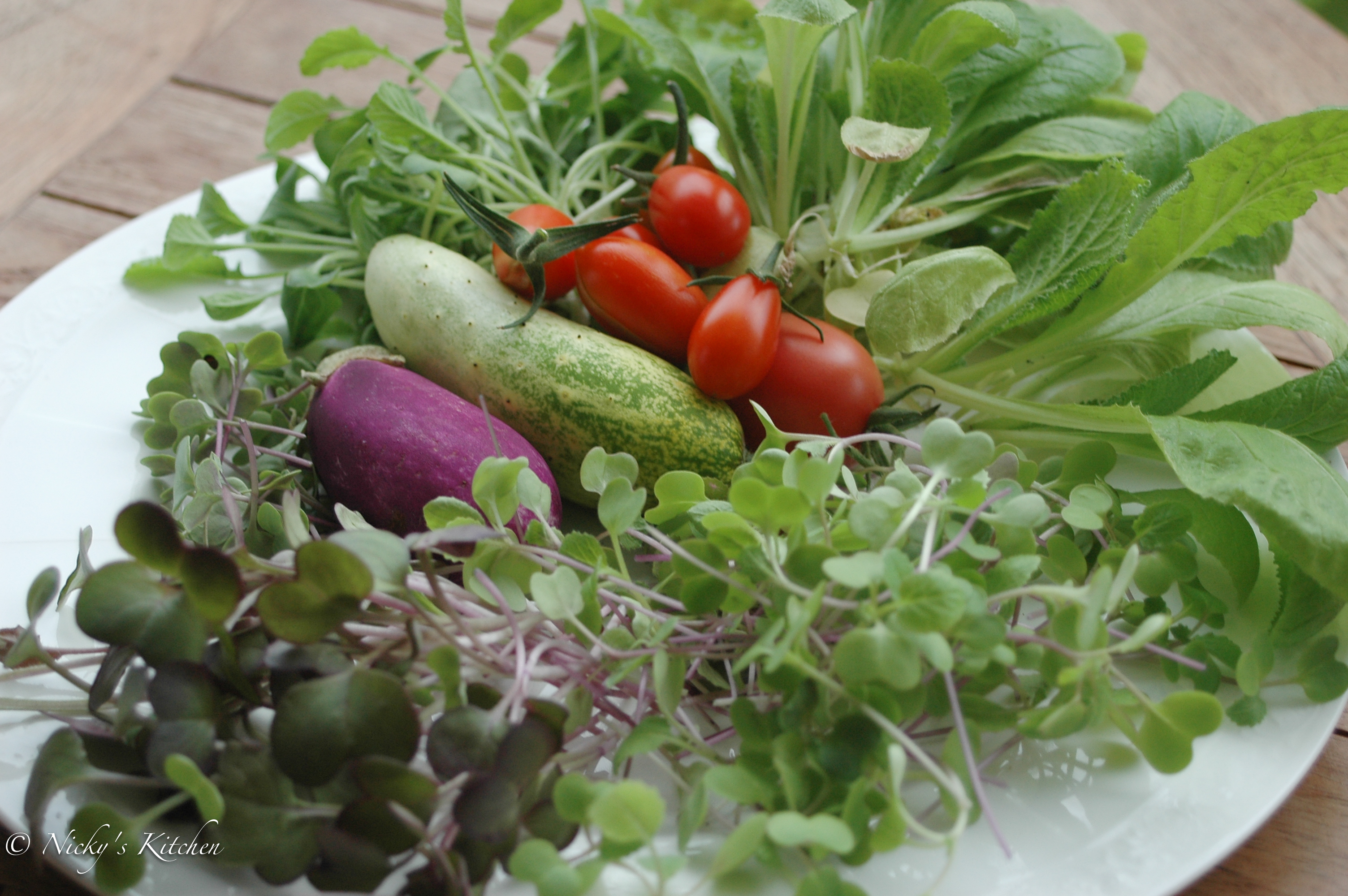 Balcony garden journal 3 – harvest time!