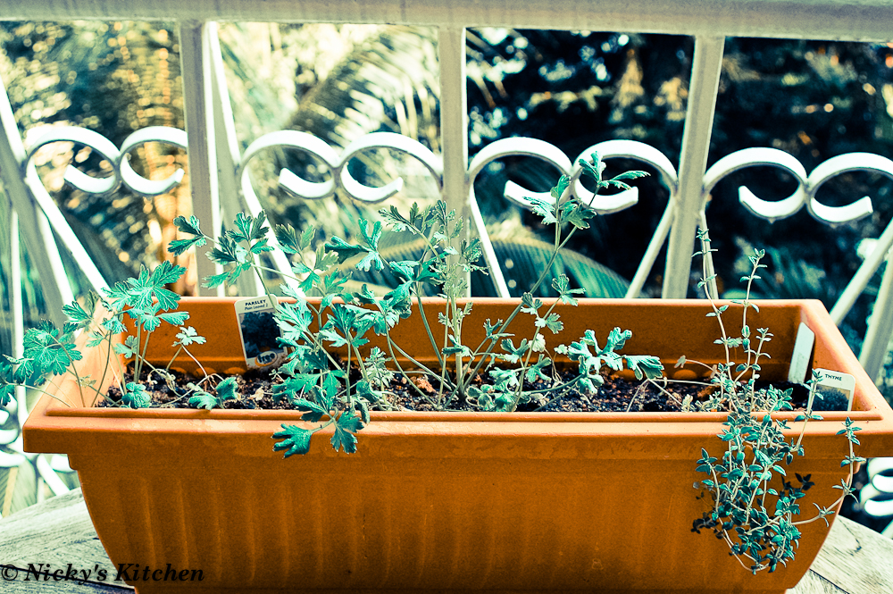Balcony garden journal 4