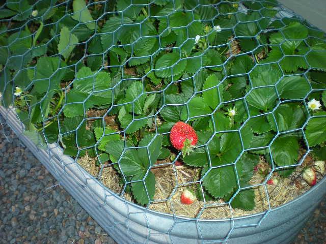 Balcony gardening update